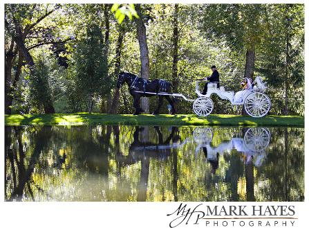 Black Percheron and White Vis-A-Vis with reflection on the lake.